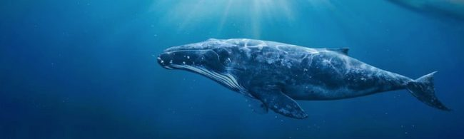 """Bách khoa sinh vật biển Crypto: Nếu không phải là cá voi thì """"em là ai giữa cuộc đời này""""?"""